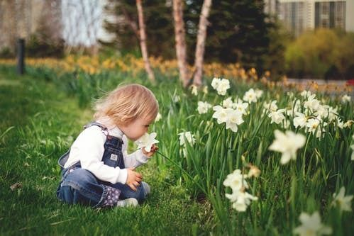 blog cultivating young gardeners
