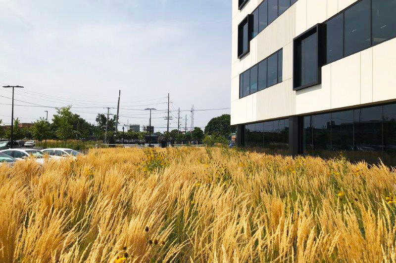 blog nature and community merge at new subaru campus