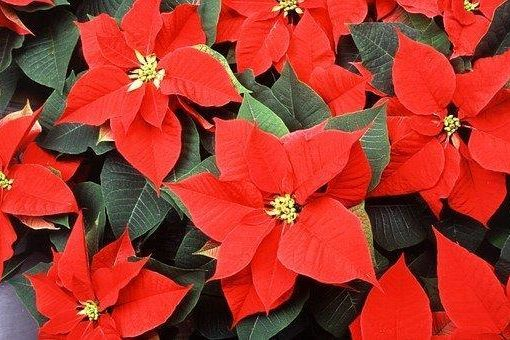 enews for the love of plants dec 2018