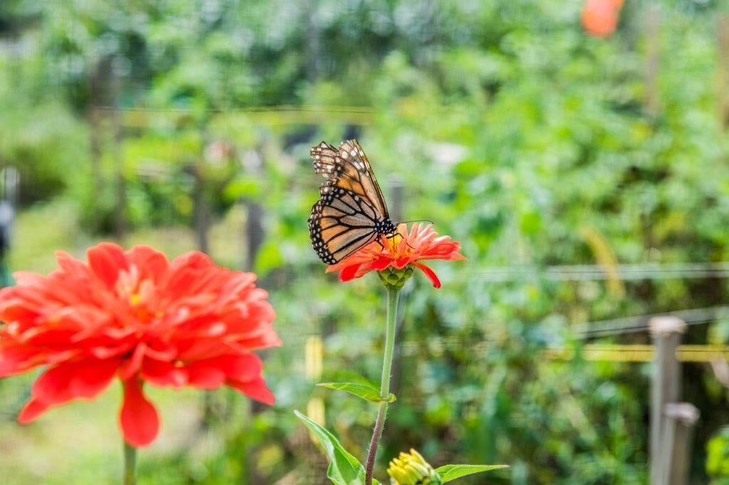 enews gardening for the greater good sep 2018 2