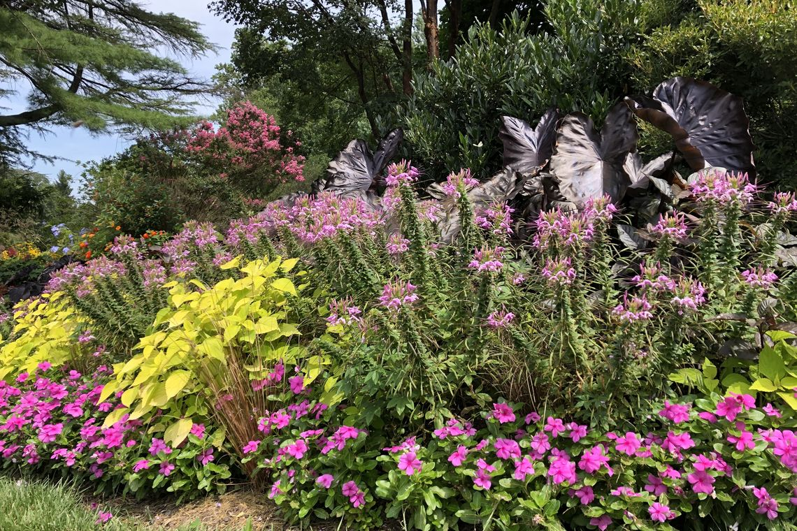 annual beds in display garden_meadowbrook