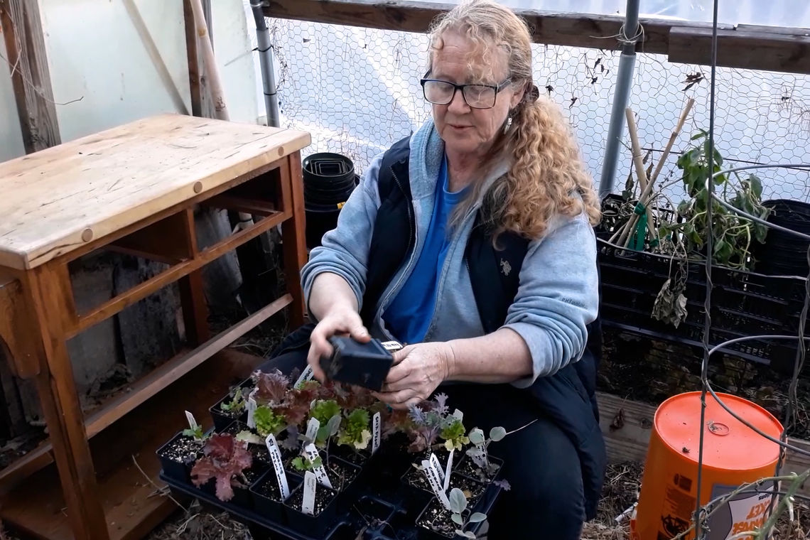 gt sally transplanting seedlings still