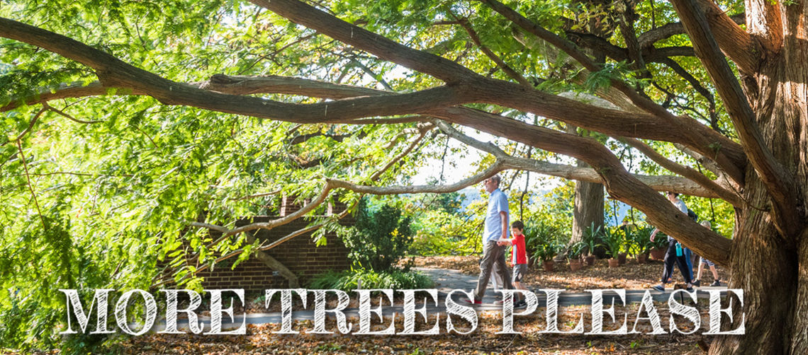 2019 more trees please hero