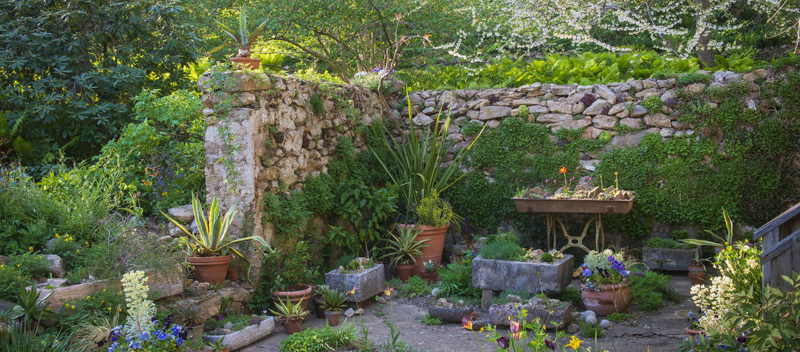 Backyard_PottedPlants