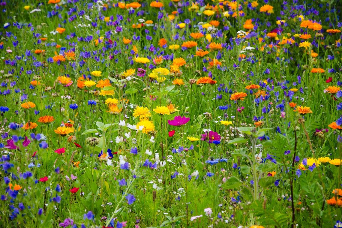 larger meadow