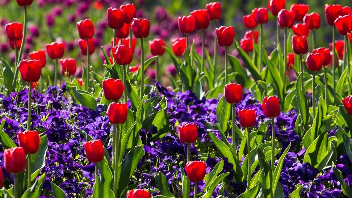 data.imageAlt