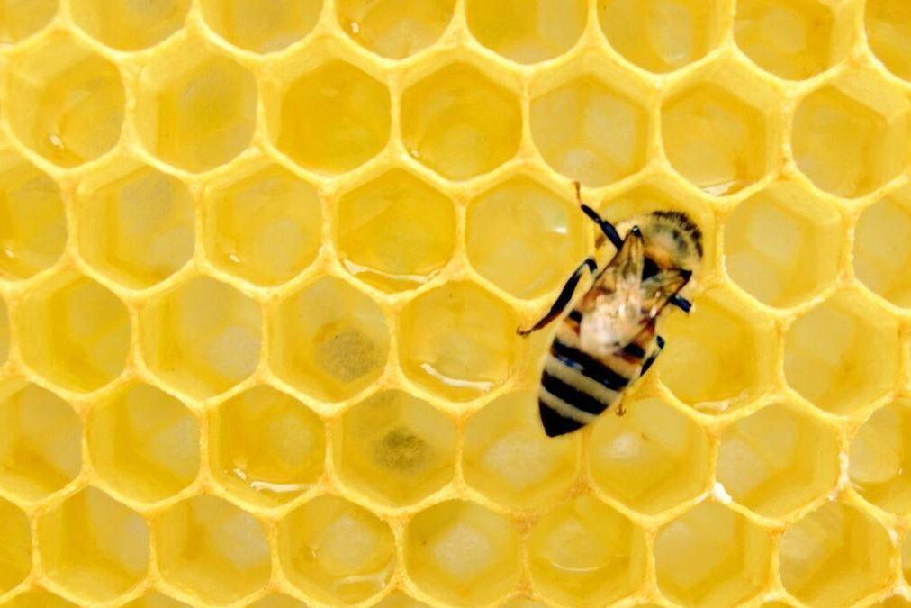 resized honeybee 5 13 20