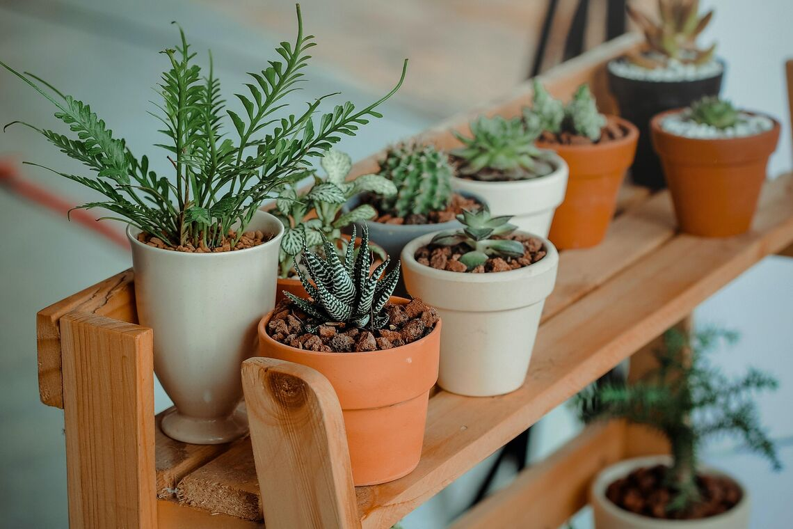 Indoor-Potted-Plants_Event-Thumbnail