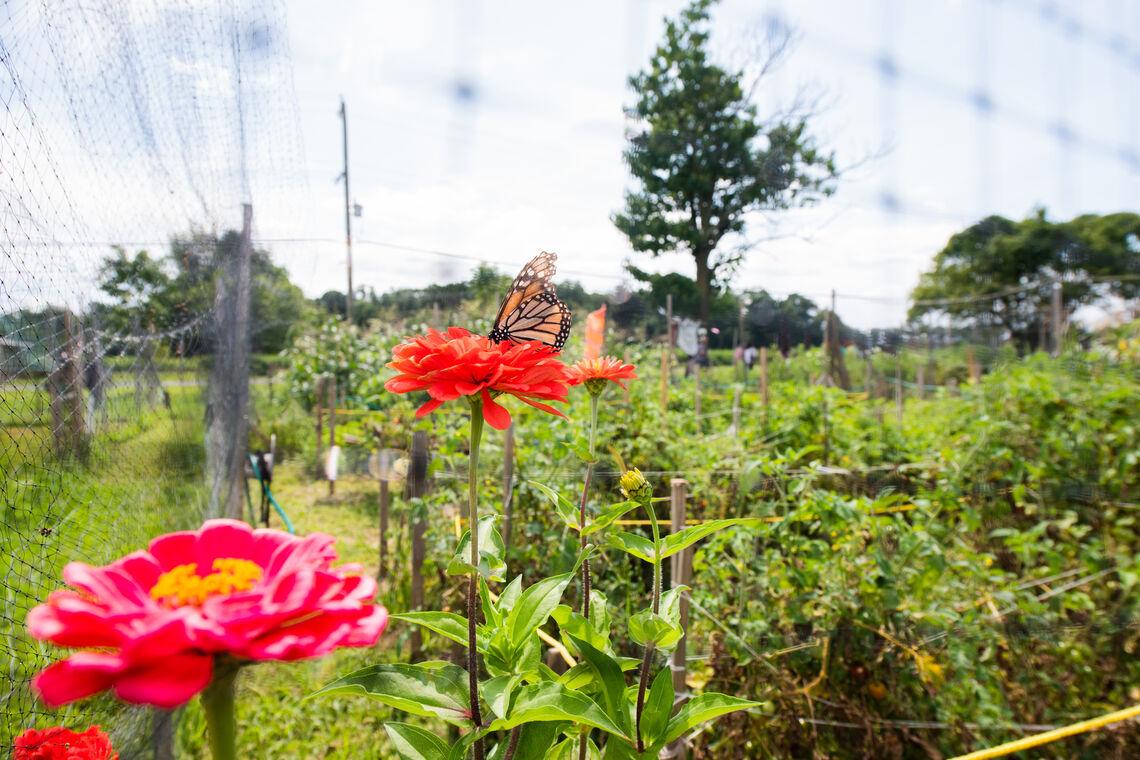 harvest 2020 plant your garden hero op 1