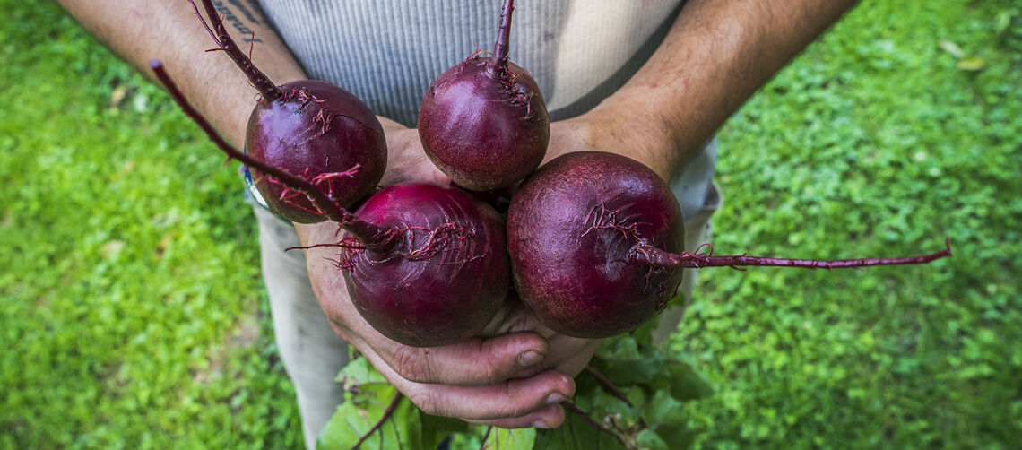 Beets_Donate Food