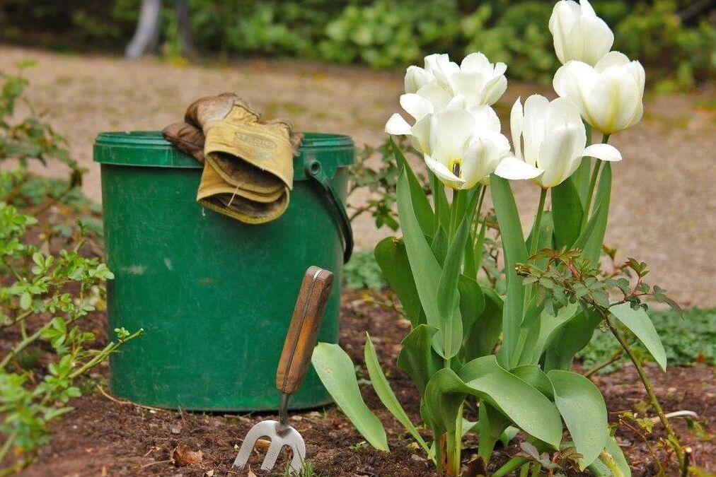 resized blog photo for 5 27 20