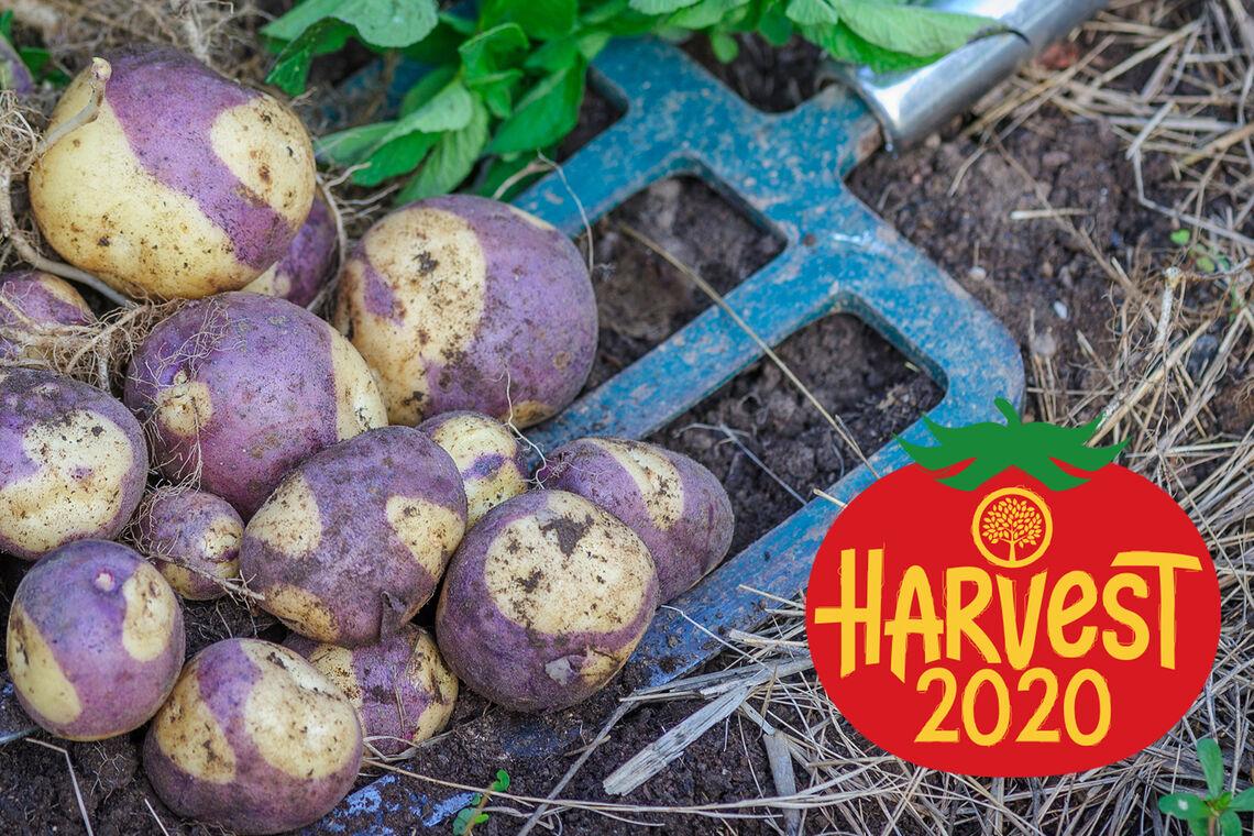 Harvest2020_Blog-Hero