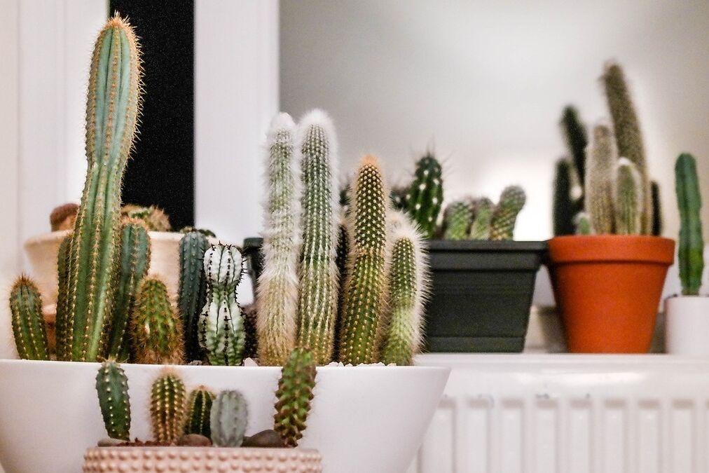 resized cactus for blog