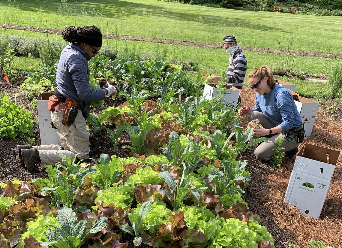 chanticleer garden harvest 2020 1