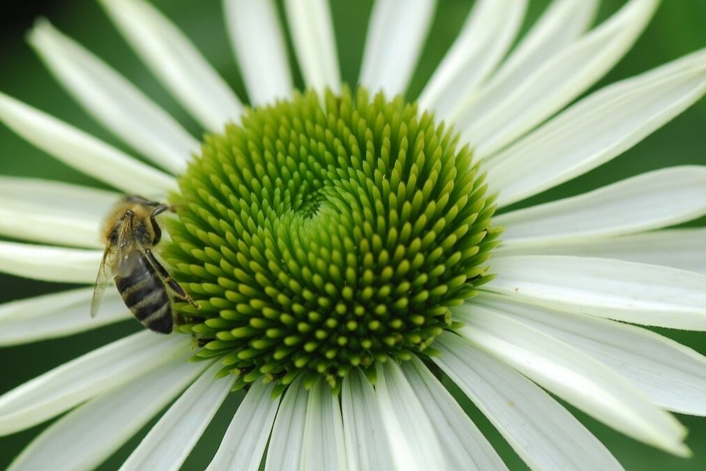 resized pollinator 7 14