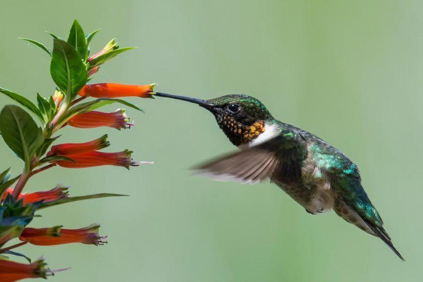 Hummingbird close_up