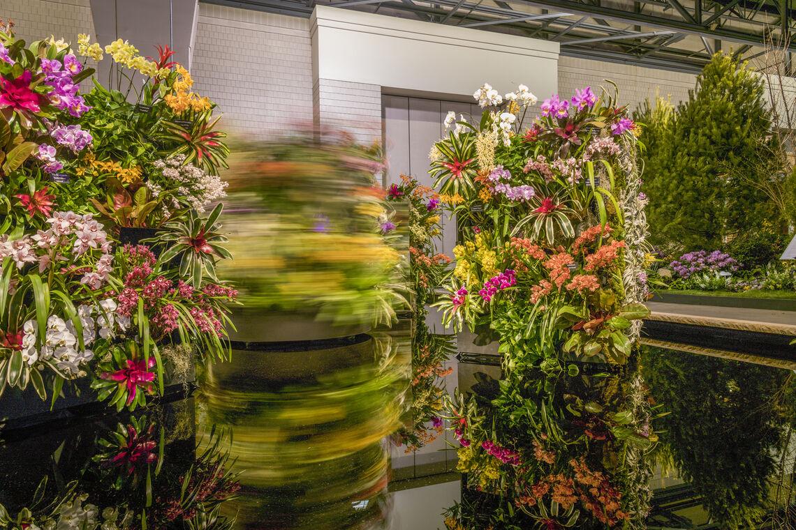 Waldor Orchids- 2019 Exhibit
