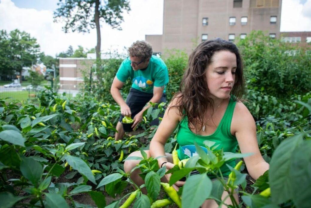 Community gardeners