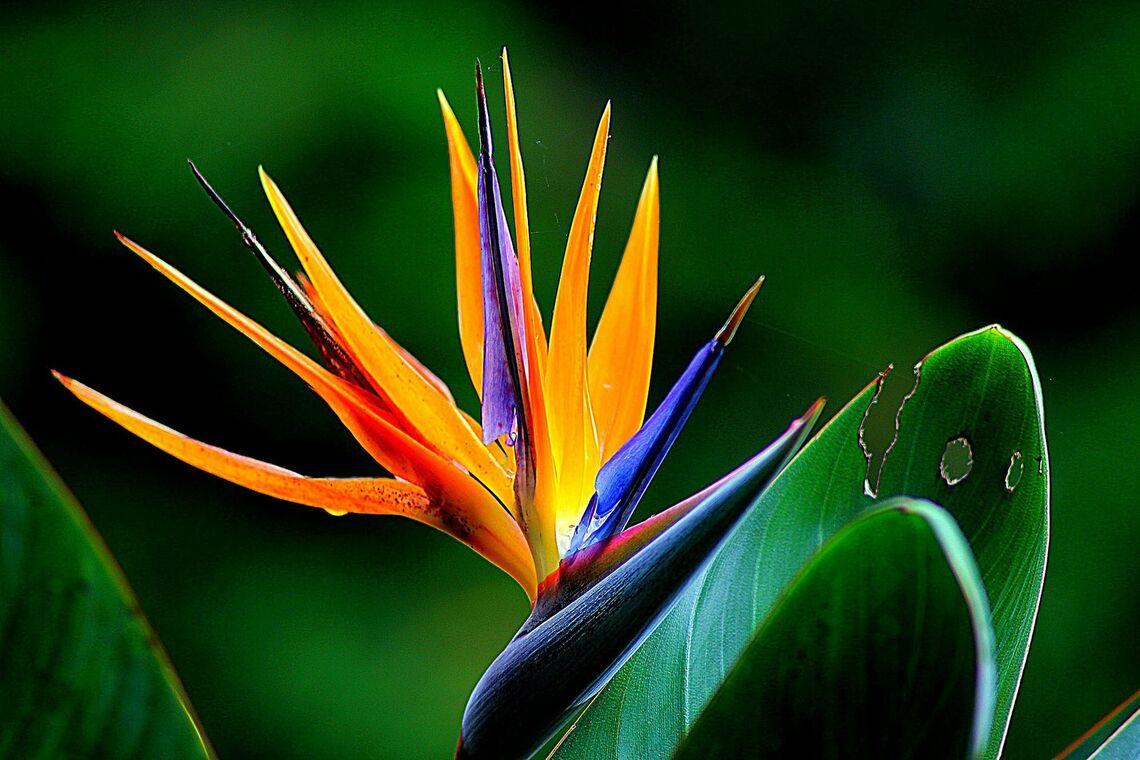 lush life tropicals