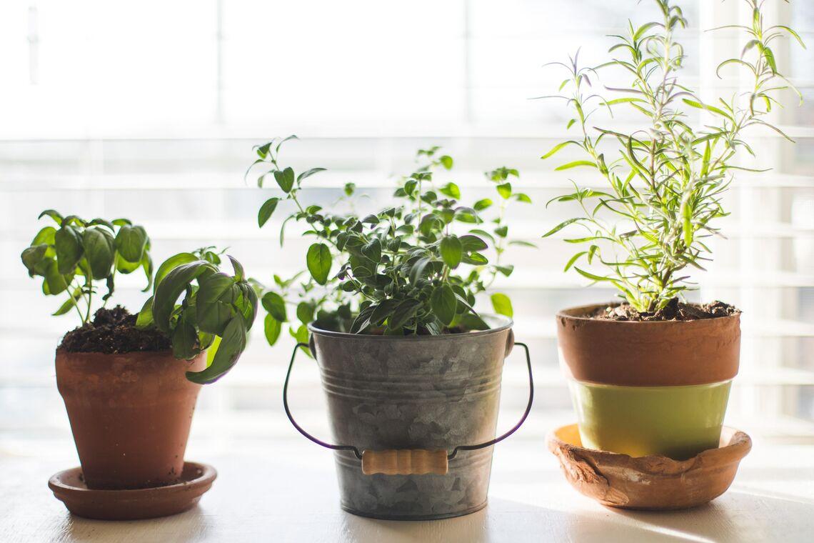 Grow Your Own Windowsill Herb Garden