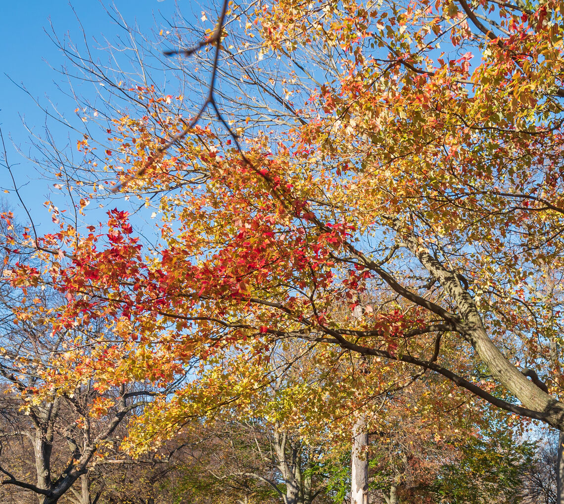 Blume Village rcp 201118 4711