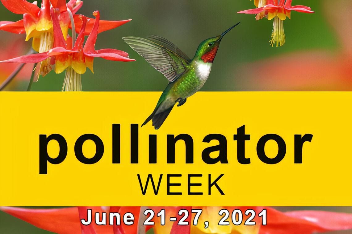 pollinator week social media graphic