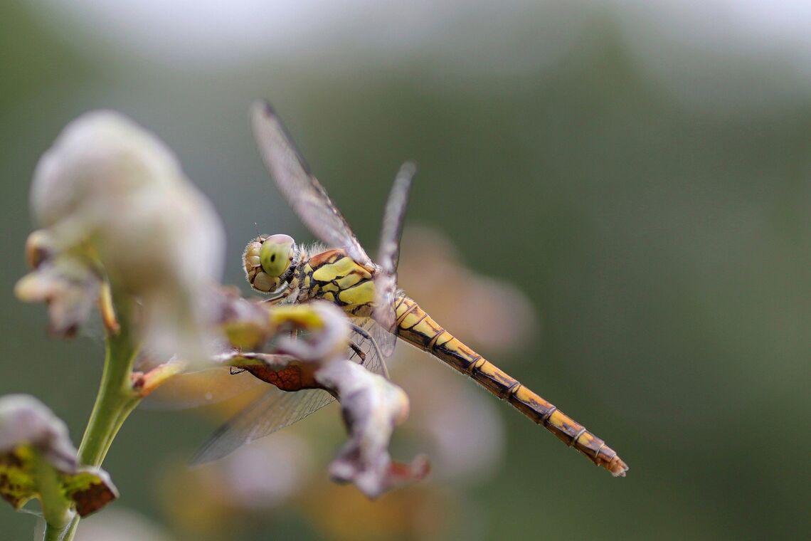dragonfly 6510395 1920